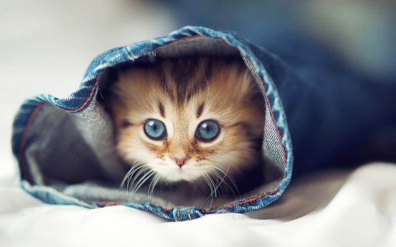 cute-cats-wallpaper