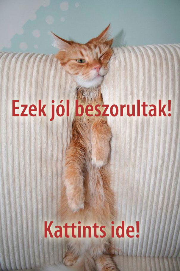 csirip.hu_funny-cats-dogs-stuck-furniture-32