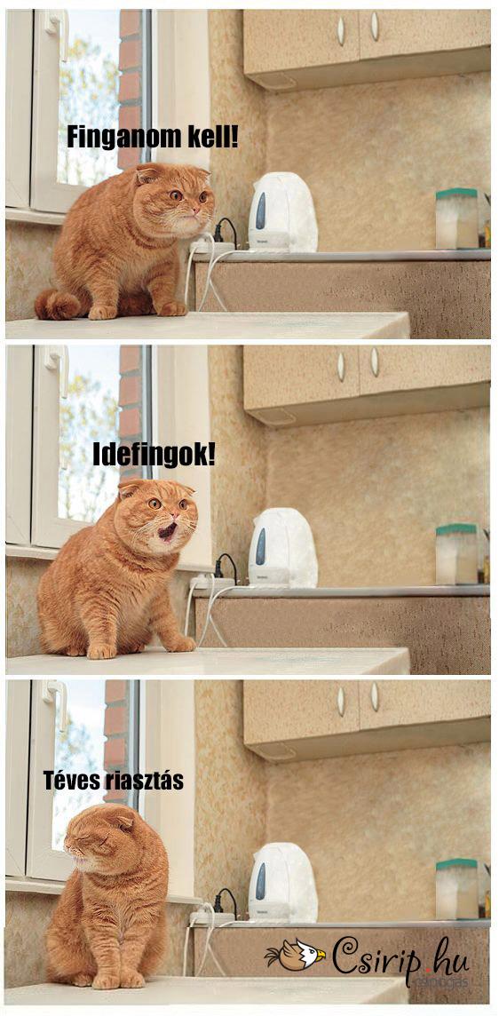 fingos-macska