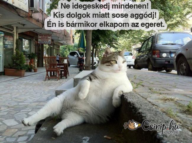 csirip.hu_az-elet-macskaszemmel-bolcs-gondolatok-cicaktol 1