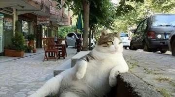 csirip.hu_isztambul leghiresebb macskaja szobrot kapott 1