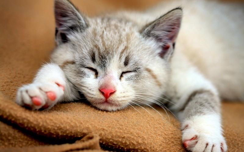cute-cat-wallpaper-hd-widescreen-8538-8538