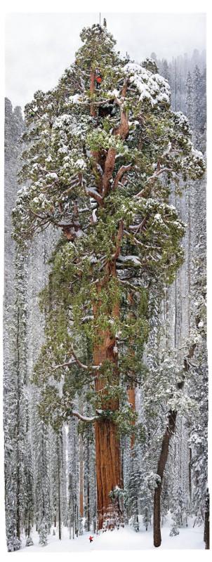 körülbelül 2 millió levele lehet, ez a kép 126 képből lett öszerakva