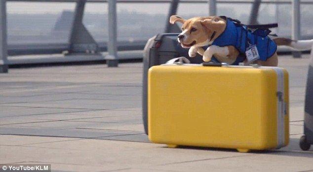 csirip.hu_az a kutyus a legaranyosabb dolgozoja az amszterdami reprernek 3