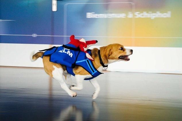 csirip.hu_az a kutyus a legaranyosabb dolgozoja az amszterdami reprernek 7